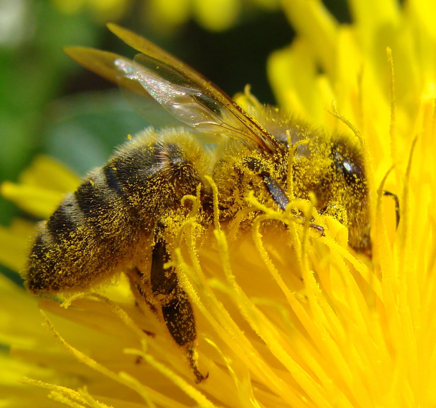 Mật ong rừng nguyên chất mua ở đâu tốt tại TP.HCM